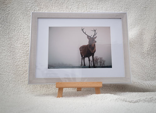 Mighty Stag - Framed