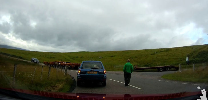 Cow Congestion