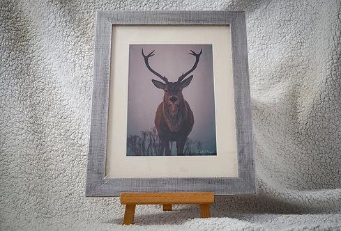 Majestic Stag - Framed