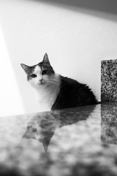 Riflesso felino