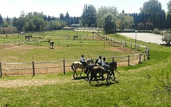 prados-caballos-3.png