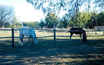 prados-caballos-2.png