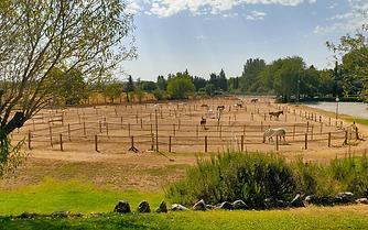 prados-caballos-1.png