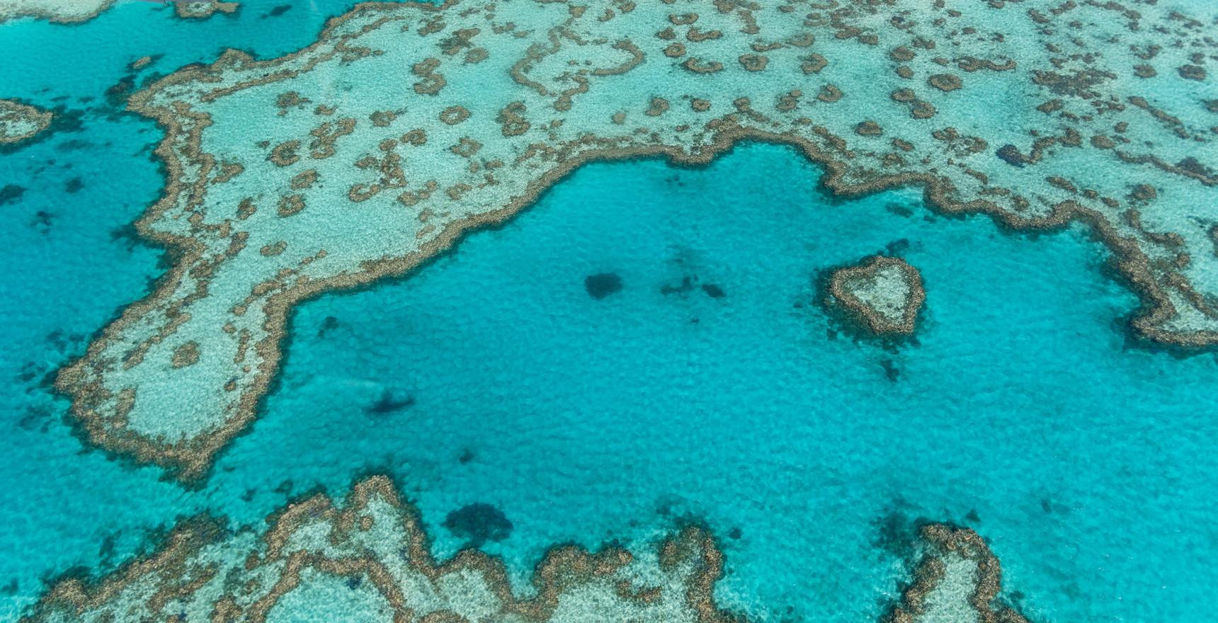 Textures of Great Barrier Reef, Australia
