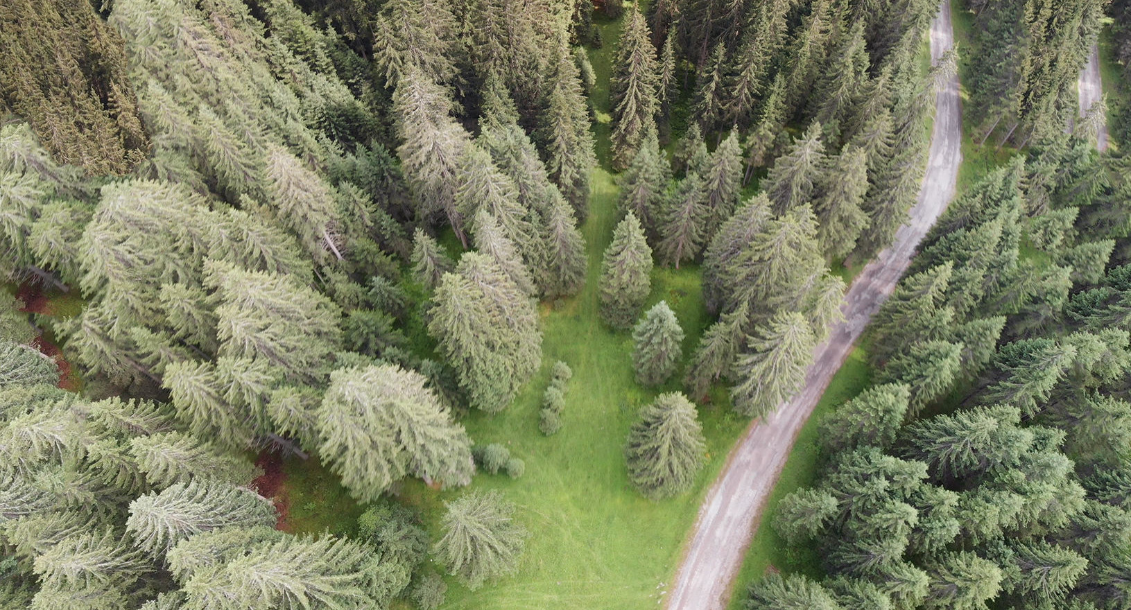 Overhead aerial view of Dolomites Forest in summer