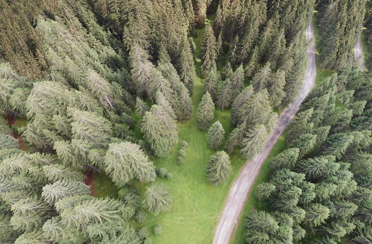 Dolomites Woods, Italy