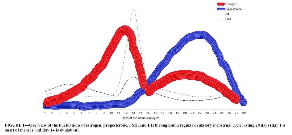 Grafik 1 nach Quelle 2: In rot ist der Verlauf von Östrogen über einen typischen Menstruationszyklus zu sehen, in blau das Hormon Progesteron - euer Goodpaint Team.