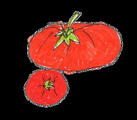 _tomaat 2.png