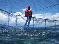 Feeding fish on Katse Dam