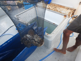 Aquaculture skills gained to date; A personal account by Jean-Luke Bristol - Aquaculture Technician