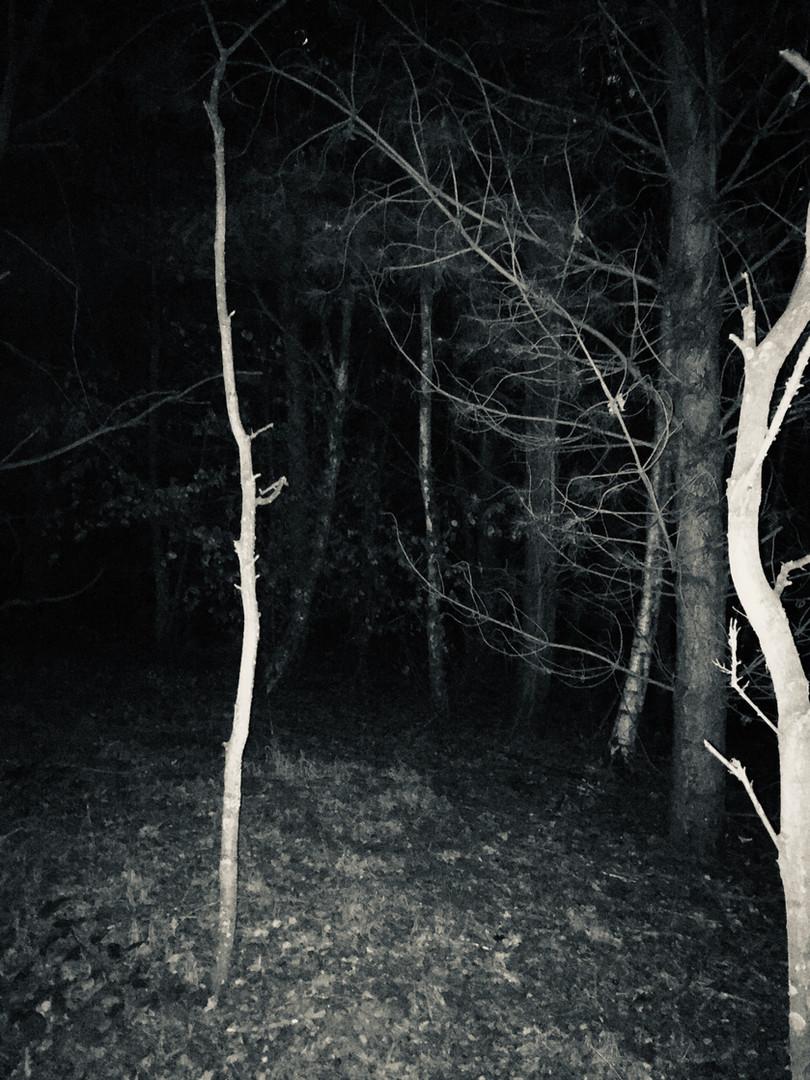 An Evening Walk 12