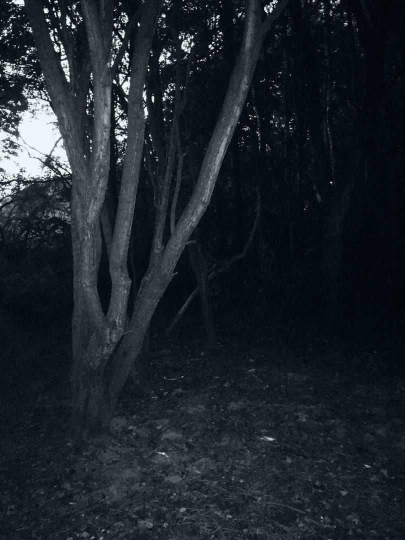 An Evening Walk 3
