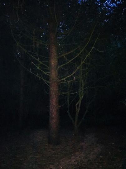 An Evening Walk 2