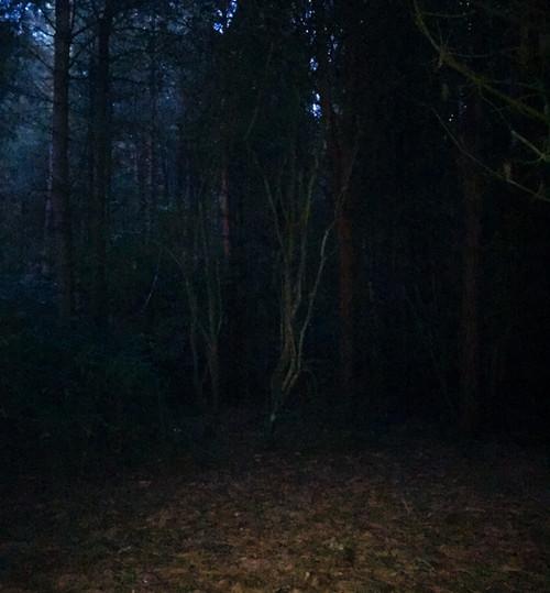 An Evening Walk 1