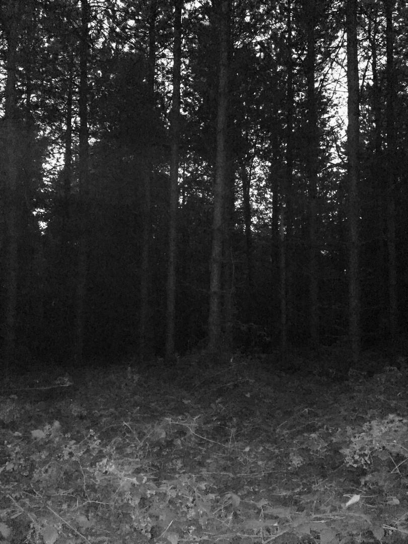 An Evening Walk 5