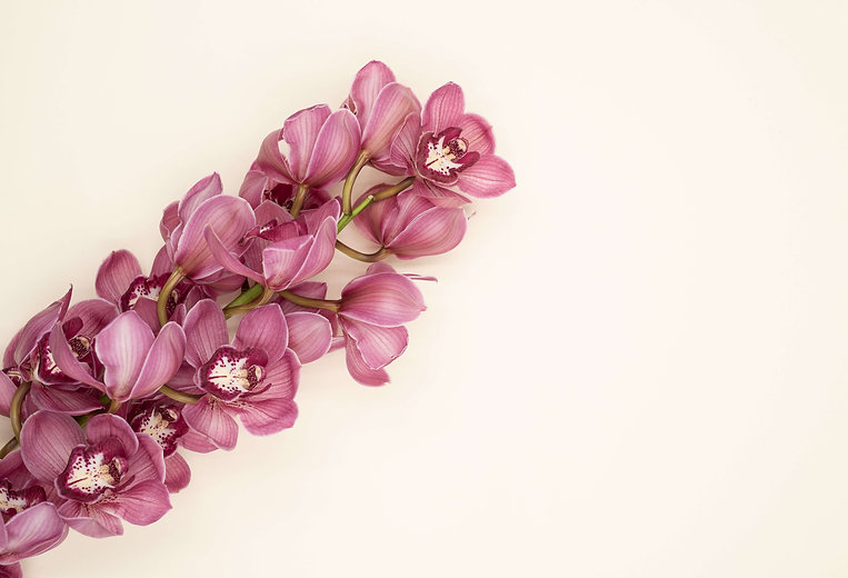 Rosarium blogin kuvassa iso purppuran värinen kukka