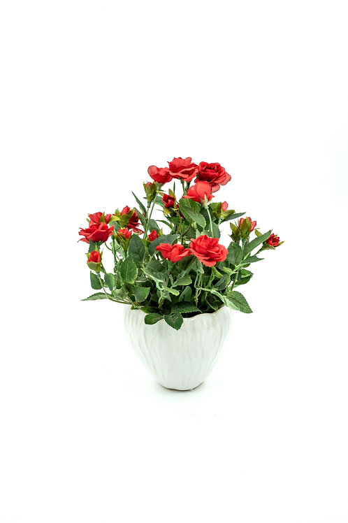 Punainen ruusu suojaruukussa
