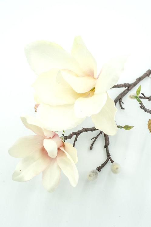 Magnolian oksa M