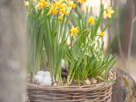 Kevään ensimmäiset ulkoistutukset