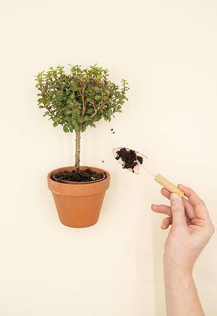 Kasviin lisätään multaa pienellä kukkalapiolla