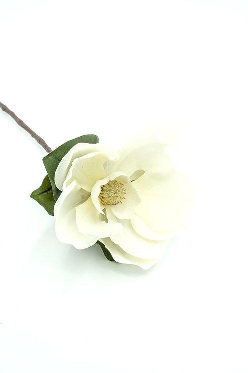 Iso yksikukkainen magnolia