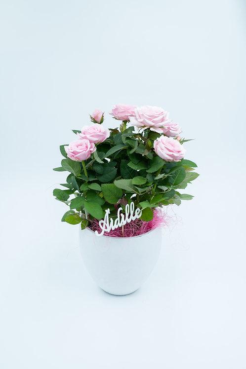 Äidille -ruusuistutus