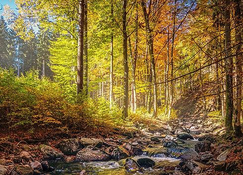 Český les Bystřice