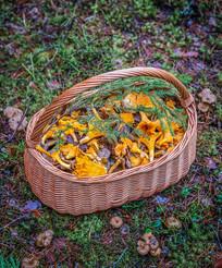Přineste si z lesa houby