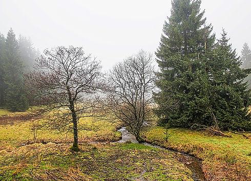 Český les Veský mlýn