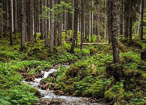 Český les Smrčí