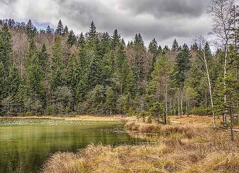 Český les Na Kolmu