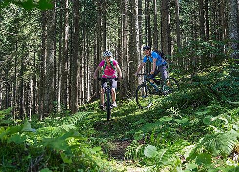Český les, cykloturistika