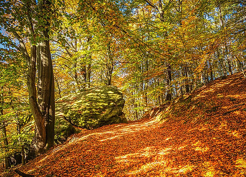 Český les přírodní rezervace Pleš