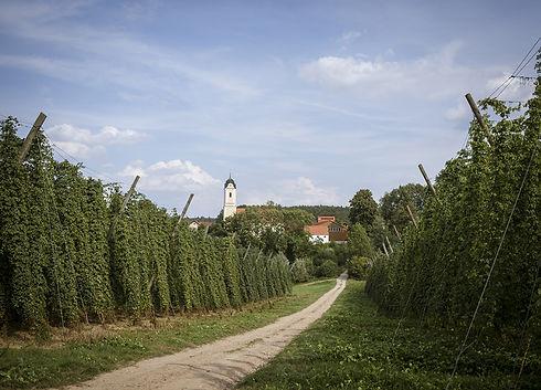 Region Oberpfalz, vinice