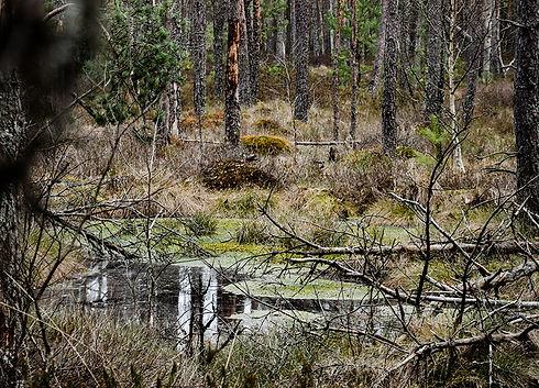Český les Podkovák
