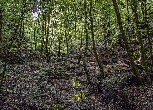 Český les rezervace Malý Zvon