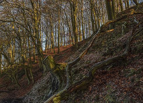 Český les přírodní rezervace Nad Hutí