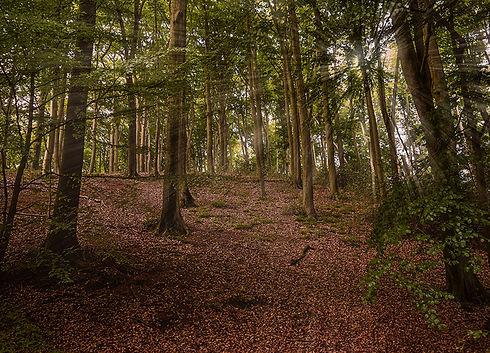 Český les Starý Hirštejn