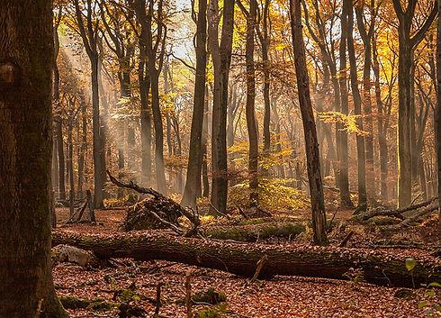 Český les přírodní rezervace Diana