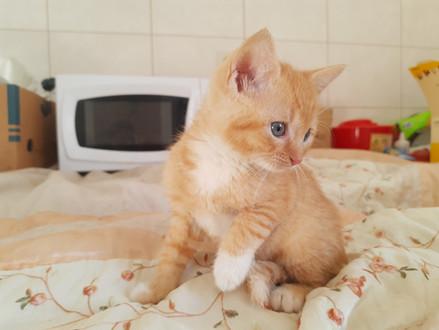 Adopcje kotków
