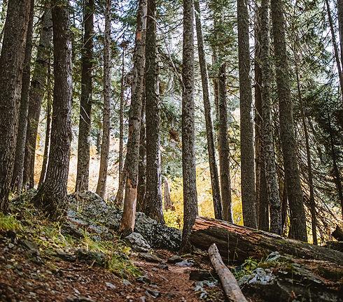 Český les