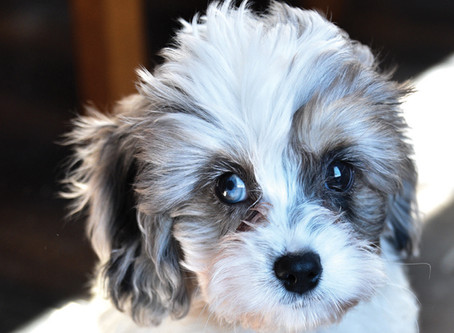 The Biggest Mistake New Puppy Owners Make