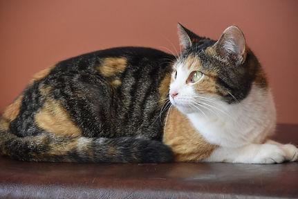 Cat on bench.jpg