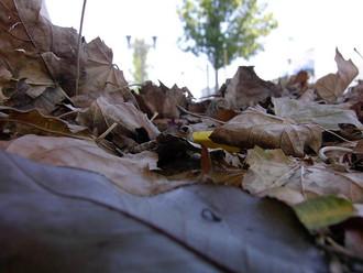 Spring Home Tip #7 - Leaves