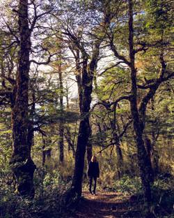Bosque húmedo templado