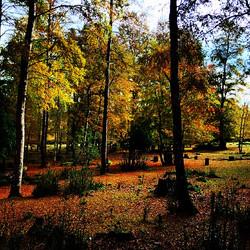 Bosque de los ciervos