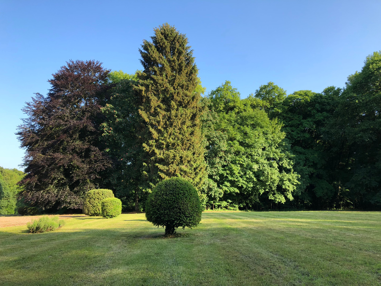 Bosquet d'arbres avec hêtre pourpre au printemps Château de Bétange