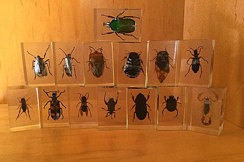 Vintage Insects in Lucite