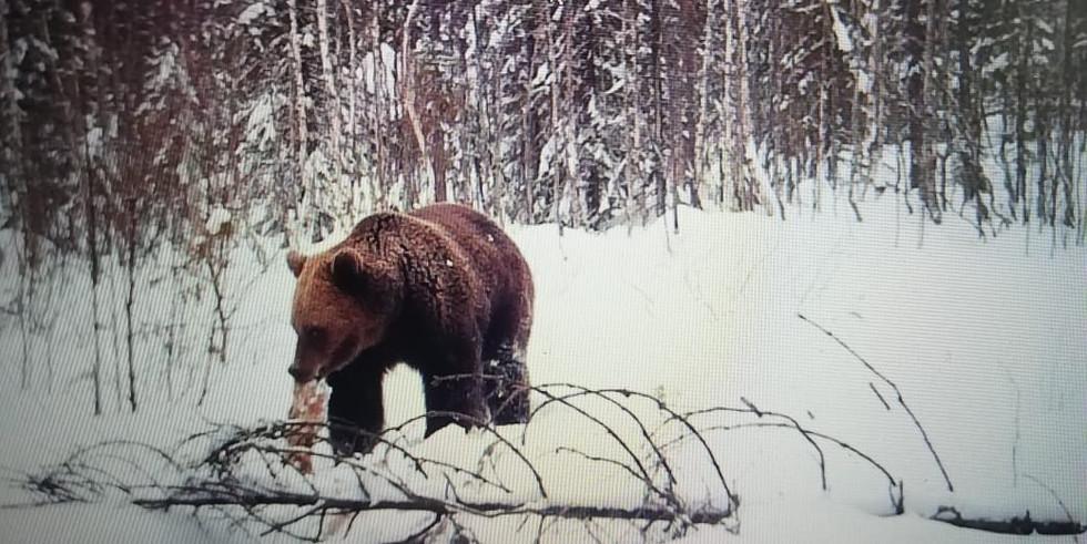 Весенняя охота на медведя.jpg