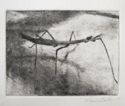 chiaroscuro stickbug print